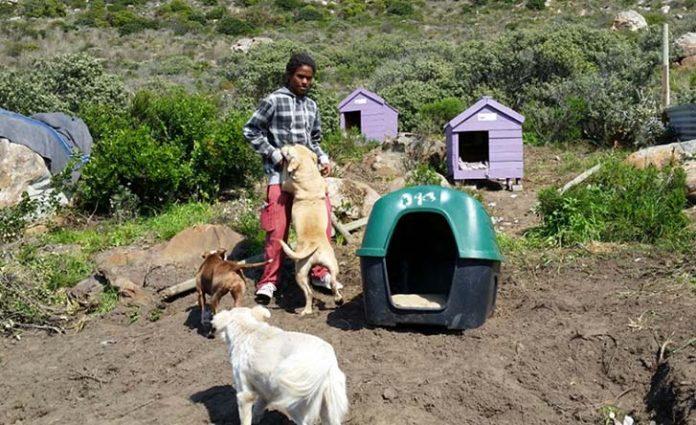 Lo echaron de su casa por ayudar a los animales