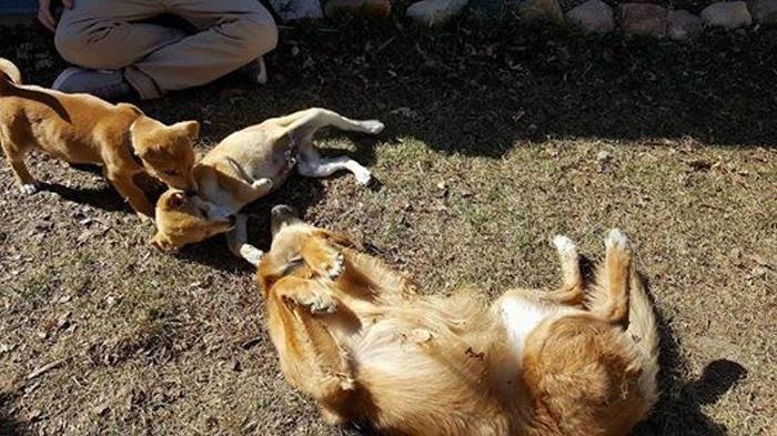 Los dos cachorros encontraron un mismo hogar