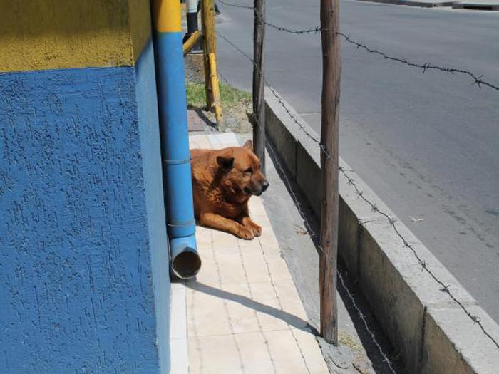 Mono ha vivido en la calle desde hace aproximadamente 10 años