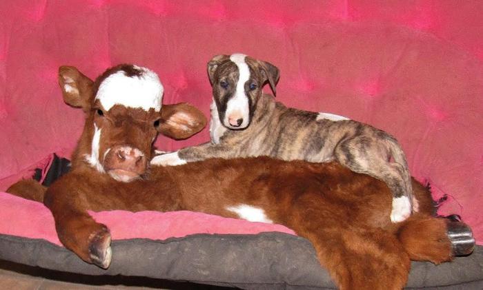 Moonpie se la lleva muy bien con los perros