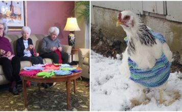 Mujeres bondadosas tejen suéteres para pollos