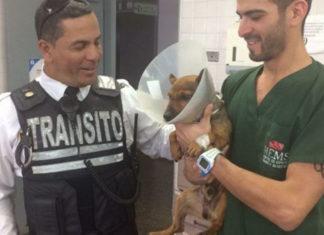 Oficial de tránsito rescató a un perro