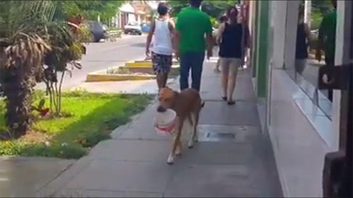 Perro con balde de agua