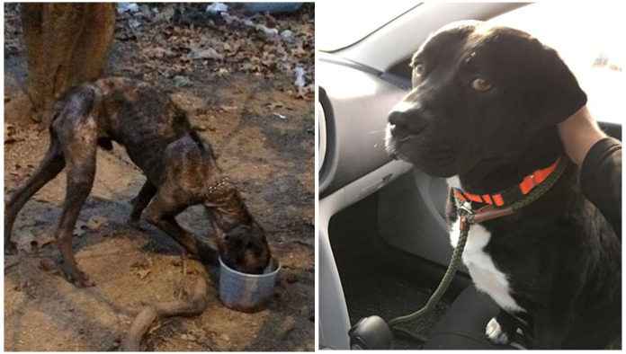 Perro estuvo encadenado 4 años