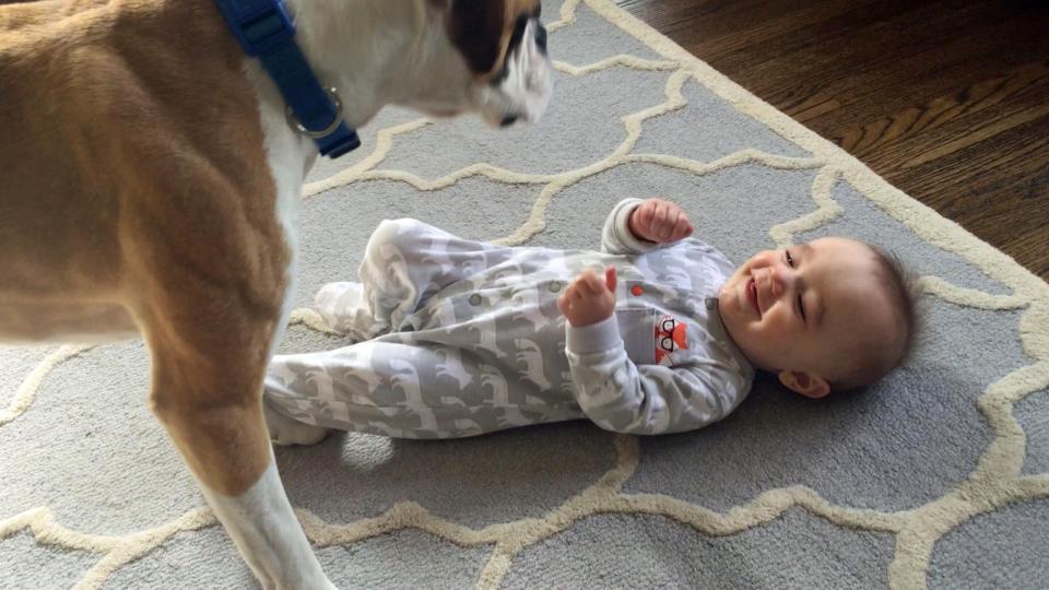 Perro le hace cosquillas al bebé