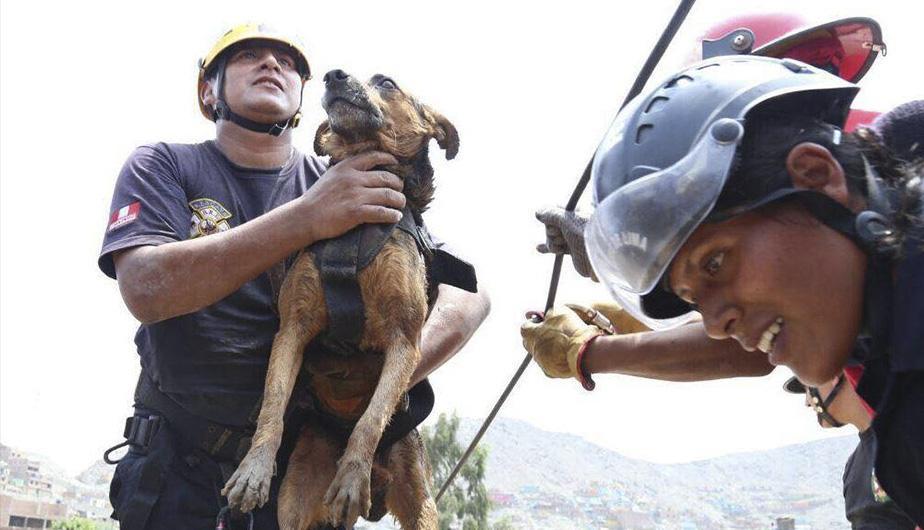 Perro rescatado en Perú