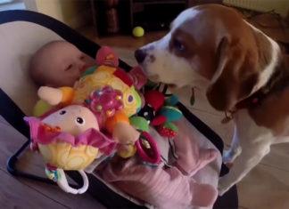 Perro se disculpa con el bebé