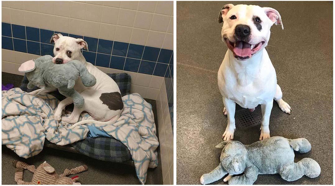 Perro triste en un refugio junto a su juguete favorito