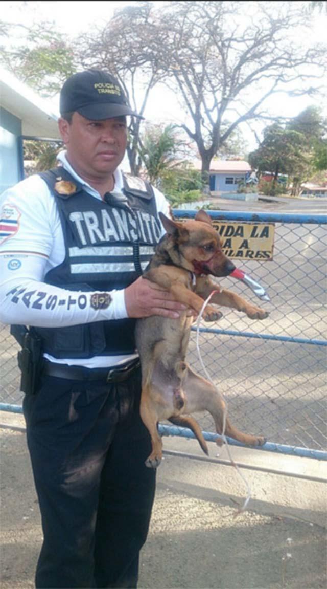 Policía de tránsito rescató a un perro