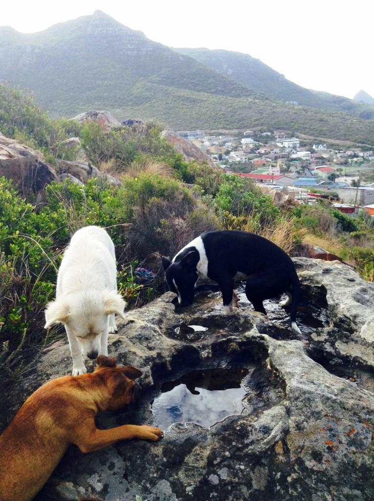 Shaygam Newman ayuda a animales sin hogar en Ciudad del Cabo