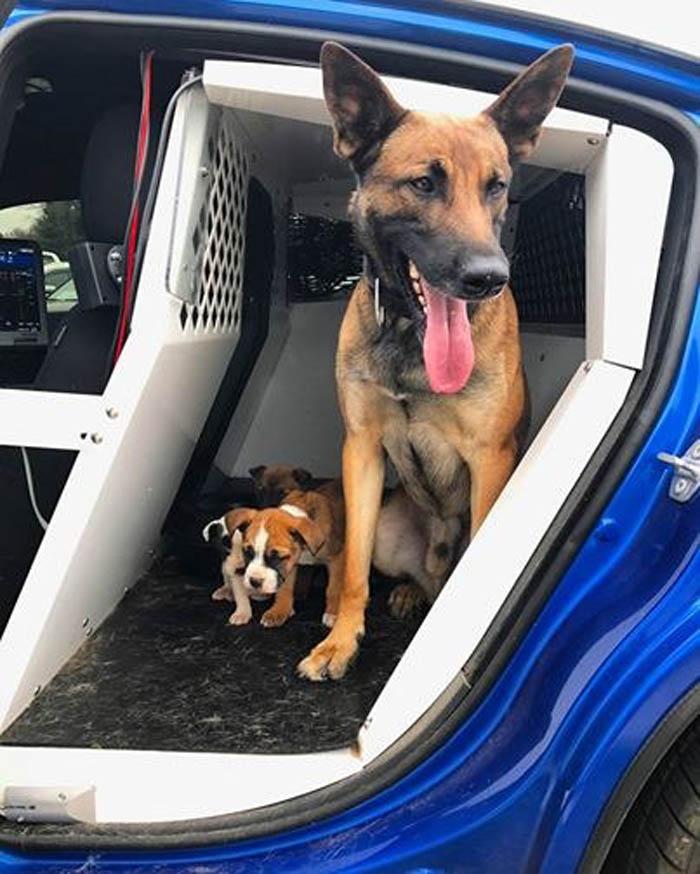 Tek y los cachorros