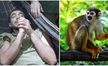 Turista chileno salvado por monos