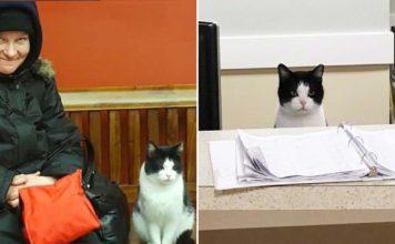 Esta gata trabaja en un asilo de ancianos