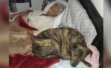 Anciana con cáncer terminal desea encontrar un hogar para sus perros