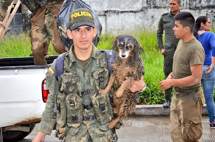 Animales rescatados de avalancha