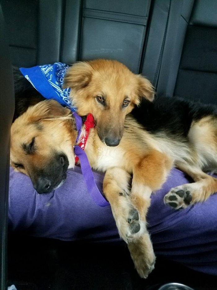 Apolo y Adonis acurrucados en el trayecto a su hogar para siempre.
