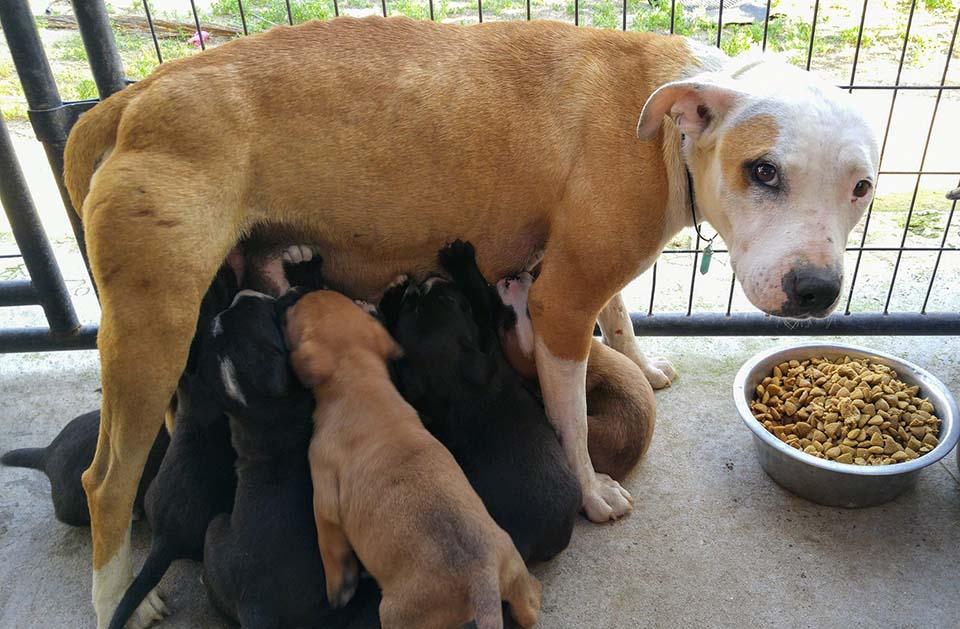 Betty Boop y sus cachorros