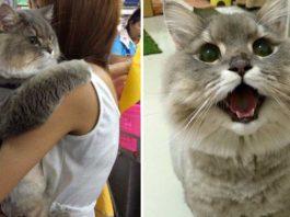 Bone Bone es un enorme y esponjoso gato que es admirado por miles