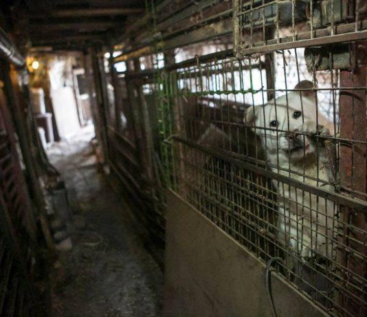 Corea prohibirá el consumo de carne de perro y gato