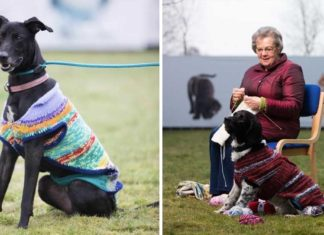Crean adorables suéteres para fomentar la adopción de perros sin hogar