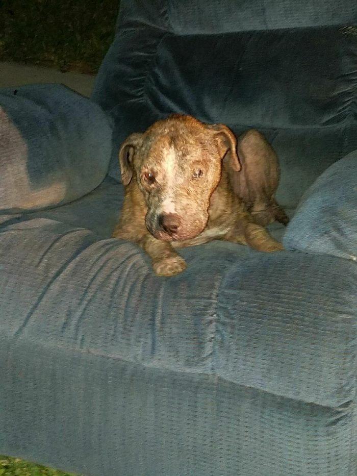 Duke esperó sentado en un viejo sillón