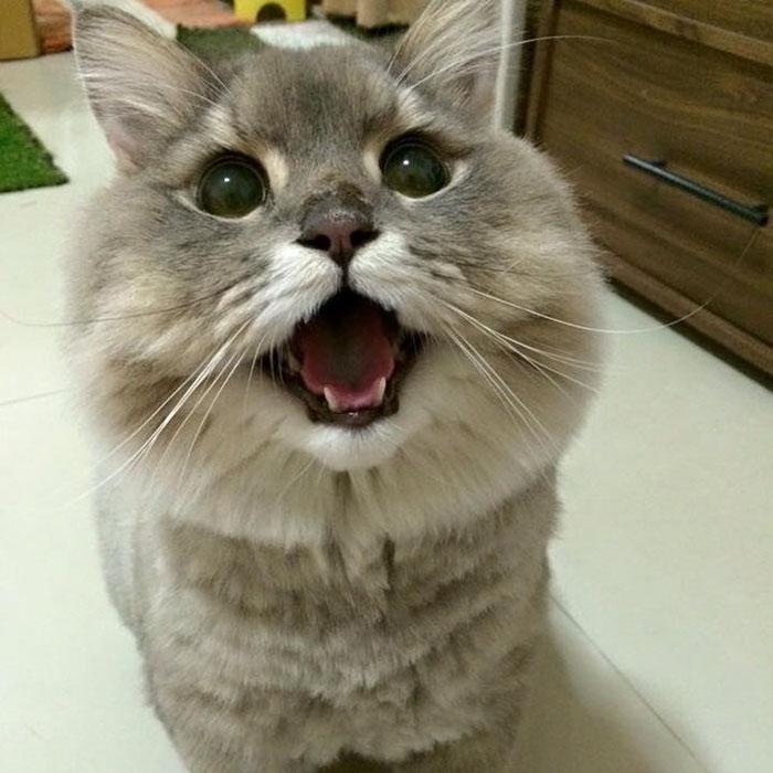 El esponjoso gato Bone Bone