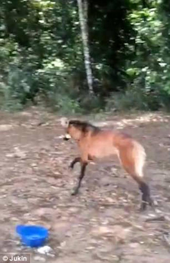 El lobo de crin se fue corriendo