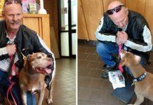 Esta adorable pitbull de 18 años se robó el corazón de un motociclista