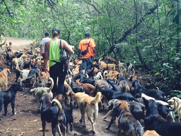 Esta mujer ayuda a cientos de perros