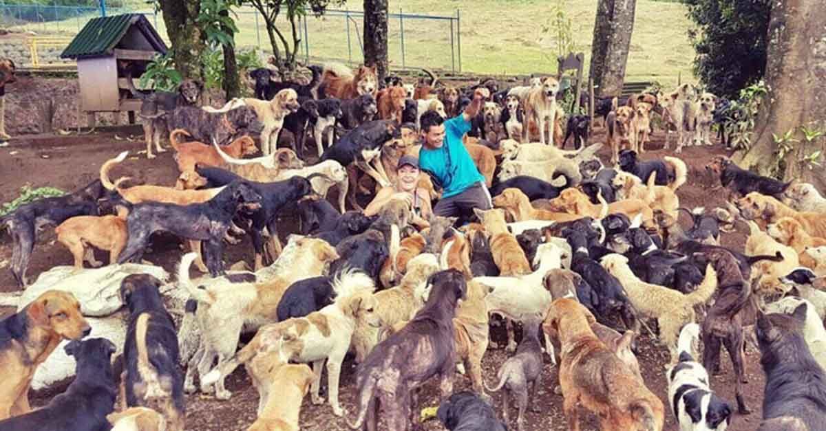 Esta mujer ha rescatado a cientos de perros no deseados