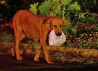 Esta perra consigue alimento para su familia todas las noches