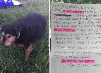 Esta perra de edad avanzada fue abandonada junto a una carta