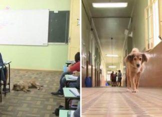 Este adorable perro vive en una escuela desde hace 16 años