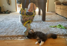 Este bebé en su columpio se ha convertido en el juguete preferido del gato