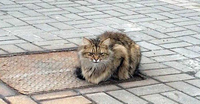 Este gato fiel ha esperado a su familia durante un año en el mismo lugar