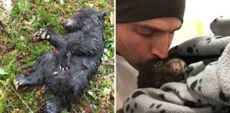 Este hombre estuvo a punto de ir a cárcel por rescatar a un oso bebé