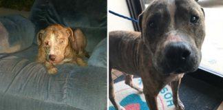 Este perro esperó sentado en un sillón viejo a que alguien lo rescatara