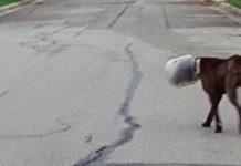 Este perro pasó 3 días enteros con su cabeza atorada en un tarro