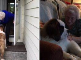 Este perro se convirtió en el mejor amigo de una mujer viuda de 92 años