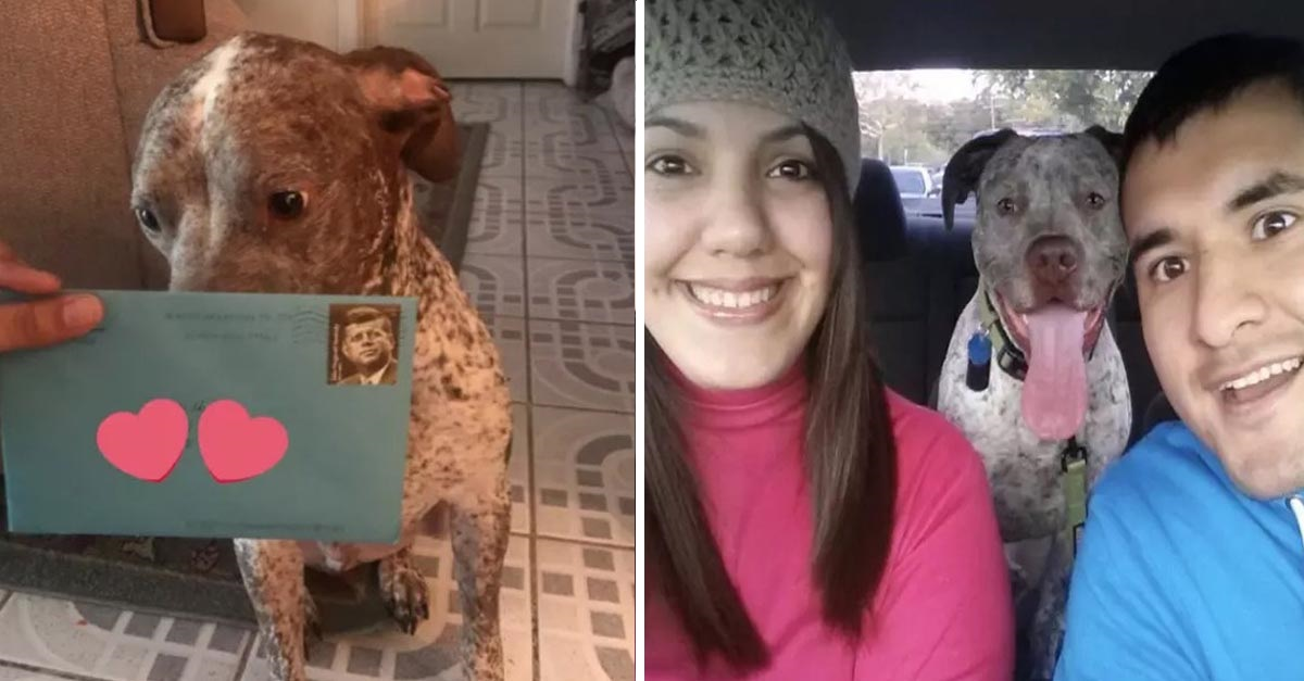 Ex pareja de una mujer le envía regalo de cumpleaños a su perro cada año