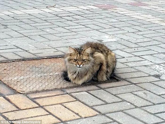 Gato espera a su familia todos los días en el mismo lugar