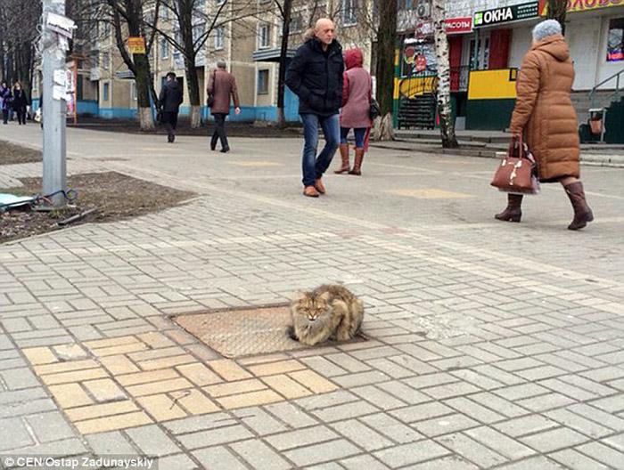 Este fiel gato aun espera el regreso de su familia