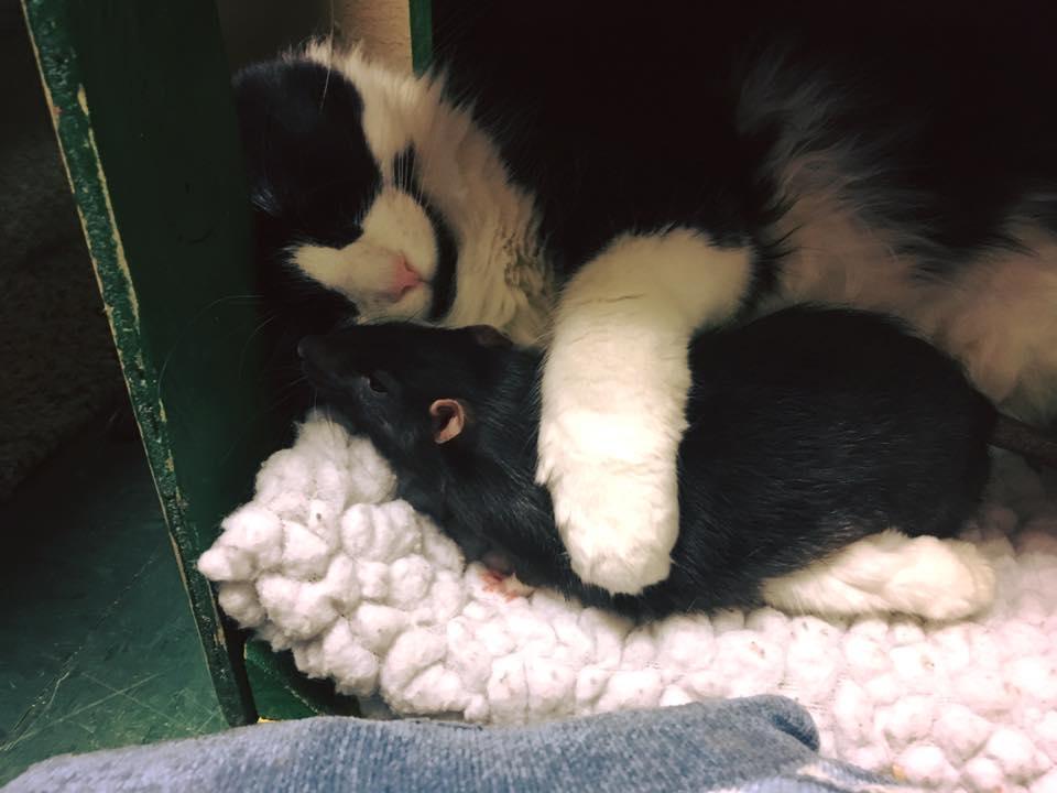 Gato y rata se abrazan