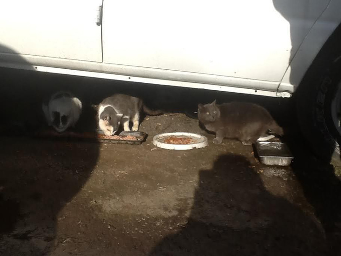 Gatos sin hogar