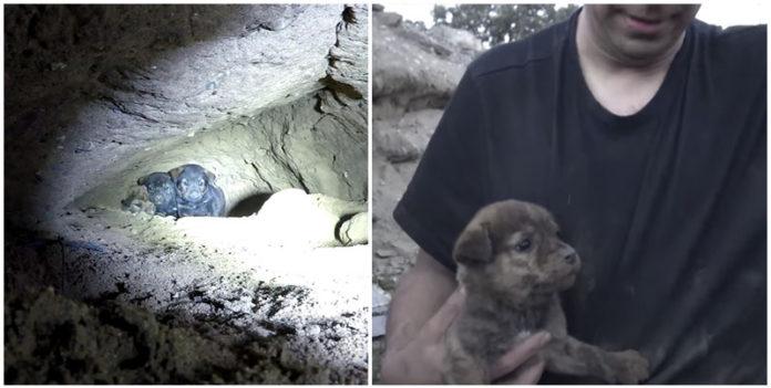 Hombre se arrastra en una pequeña cueva para rescatar 9 cachorros
