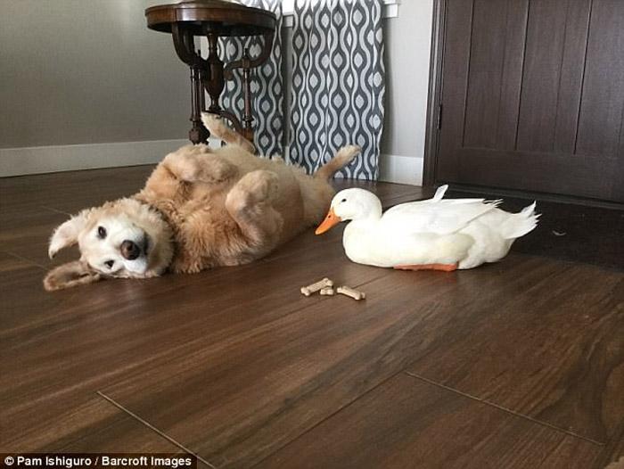 Les gusta acostarse en el suelo