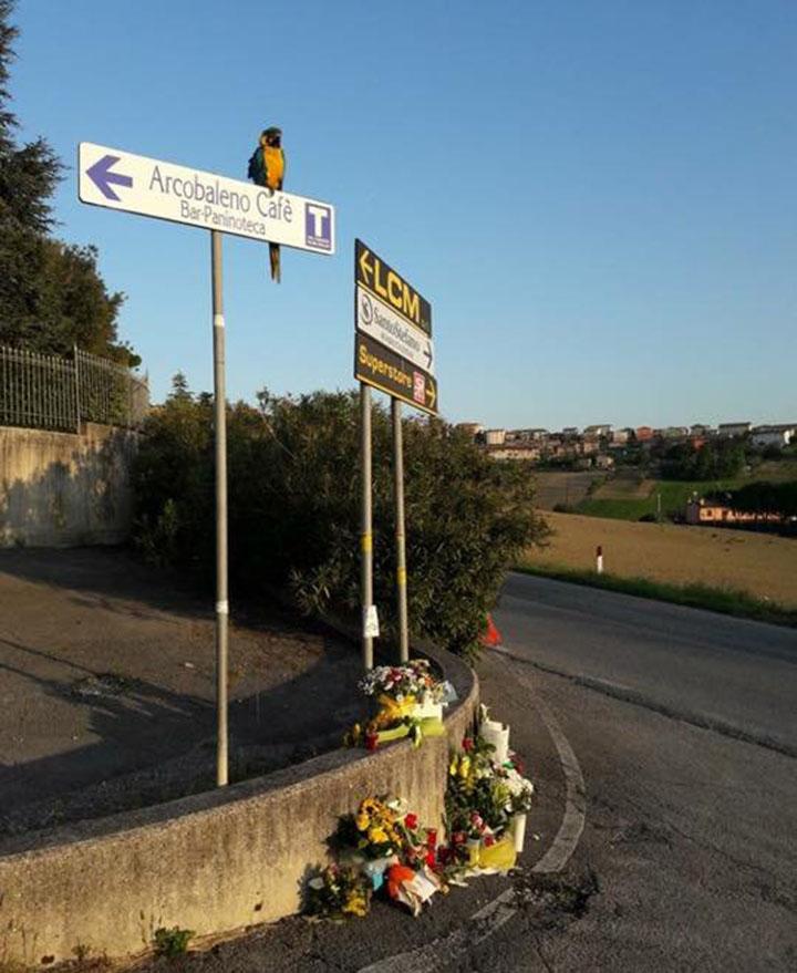 Loro espera al ciclista italiano fallecido