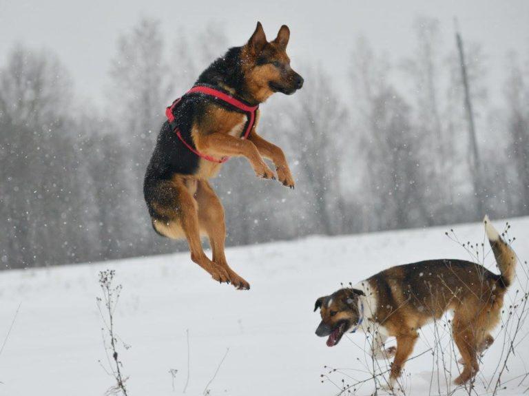Luke saltando