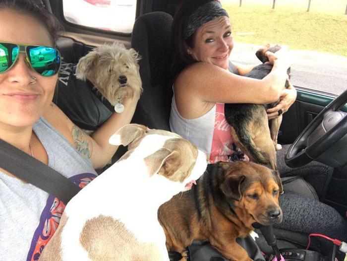 Lya ayuda a cientos de perros