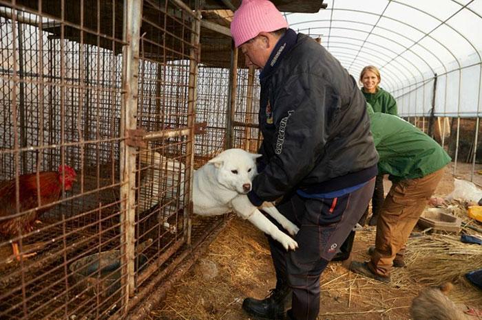 Mercado de carne de perro en Corea